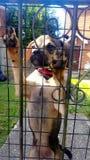 ¡Rolo del perrito! Fotos de archivo