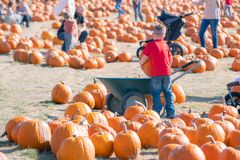 Child loading big pumpkin into a cart royalty free stock image
