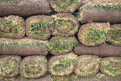 Rolos da grama do relvado imagens de stock