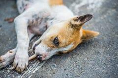 Rolos dos cães que jogam sobre a parte externa Fotografia de Stock
