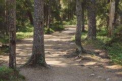 Rolstoel toegankelijke wandelingssleep in zonnige pijnboombossen royalty-vrije stock afbeeldingen