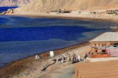 Roltrappencaravan van kamelen in de bergen van Sinai Blauwe Zaal op 15 JUNI, 2015, in Sharm el Sheikh, Egypte Royalty-vrije Stock Foto's