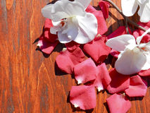 romántico Foto de archivo libre de regalías
