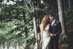 Romántico, cuento de hadas, pares felices del recién casado que abrazan y que se besan en un parque, árboles en fondo fotografía de archivo libre de regalías