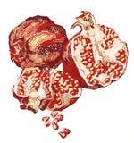 Romã pintados à mão isoladas no branco Imagem de Stock Royalty Free
