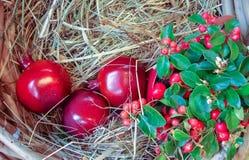 Romã vermelha na palha em uma cesta de vime fotos de stock