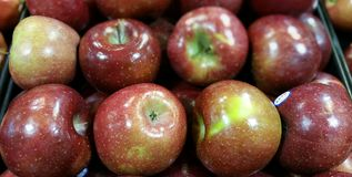 Rom-Äpfel Lizenzfreies Stockfoto