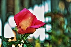 Rom Rose Garden stockbild