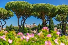 Rom Rose Garden, Italien Stockfotografie