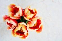 ROM vermelha e amarela das tulipas aérea Fotografia de Stock Royalty Free