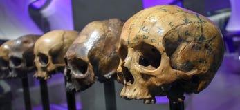 Romańska czaszki część «chwały i krwi «wystawa, muzeum Londyn zdjęcia royalty free
