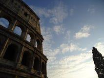 Romański colosseum z drzewem fotografia stock
