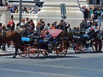 Roma - carrelli con i cavalli Fotografia Stock