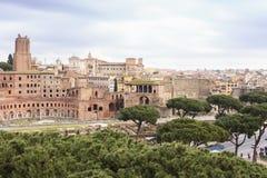 Roma e pini antichi Fotografie Stock Libere da Diritti
