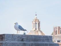 Roma, Italia, 12 puede 2015, gaviota se coloca sobre los tejados en el centro histórico de la ciudad foto de archivo libre de regalías