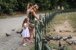 ROMA, ITALY - AUGUST 2018: Happy family feeds ducks and pigeons in a city park. Happy family feeds ducks and pigeons in a city park stock image