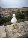 Roma Italy forntida härlig stad för lopp Royaltyfria Foton