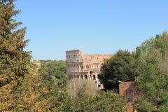 Roma na mola atrasada fotografia de stock