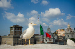 Roma, piazza Venezia Fotografia Stock Libera da Diritti