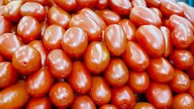 Roma pomidory Fotografia Stock