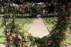 Roma Rose Garden immagini stock libere da diritti