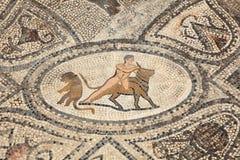 Romańska mozaika w Volubilis Fotografia Royalty Free