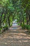 Roma. Street trees villa in Frascati in Rome Stock Photo