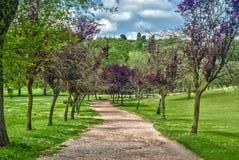 Roma green Village Pamphili. Street trees villa in Frascati in Rome Royalty Free Stock Image