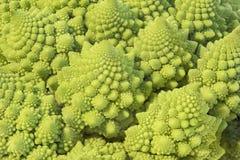 Romańszczyzny kapusty fractals Fotografia Royalty Free