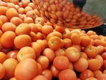 Roma tomater royaltyfri fotografi