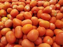 Roma tomater arkivfoto