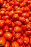 Roma Tomato Stockbild