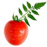 Roma tomato Stock Image