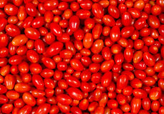 Roma Tomatoes. Image of many Roma Tomatoes piled up so it fills the entire image royalty free stock photo