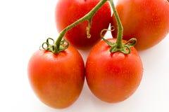 Roma tomatoes. Organic Roma tomatoes on white background Stock Photography