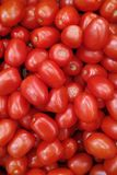 Roma tomatoes stock photography
