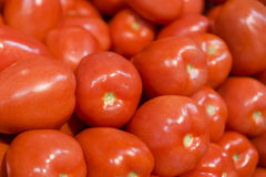 Roma Tomatos fresco Immagine Stock