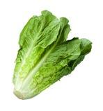 Romain-Kopfsalat getrennt auf Weiß Stockfotos
