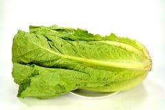 Romain lettuce Royalty Free Stock Photography