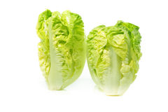 Romain Lettuce isolated on white background Royalty Free Stock Images