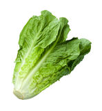 Romain Lettuce isoleerde op wit Stock Foto's