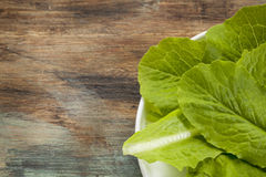 Romaine or cos lettuce Royalty Free Stock Photography