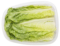 Romaine heart leaves Royalty Free Stock Images