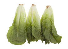 Romaine Hearts Stock Photo