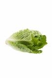 Romaine lettuce Royalty Free Stock Photos