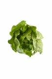 Romaine lettuce Stock Images