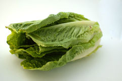 Romaine Lettuce. Image of a romaine lettuce Royalty Free Stock Photos