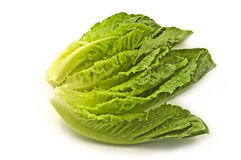 Romaine lettuce. Fresh tender leaves of romaine lettuce isolated on white background with copy space, horizontal format Royalty Free Stock Photos