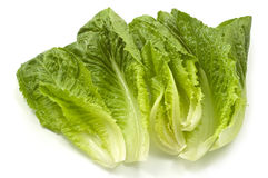 Romaine lettuce. Fresh tender leaves of romaine lettuce isolated on white background with copy space, horizontal format Royalty Free Stock Image