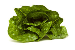 Romaine lettuce. From low perspective isolated on white Royalty Free Stock Image